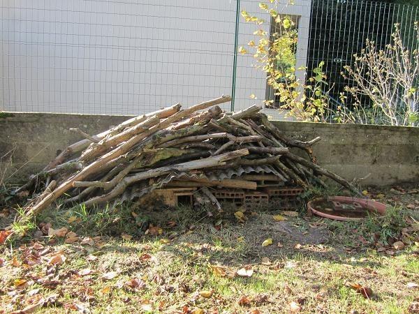 La vie sous le tas de bois